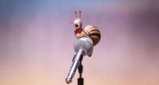 2441_fp_snail
